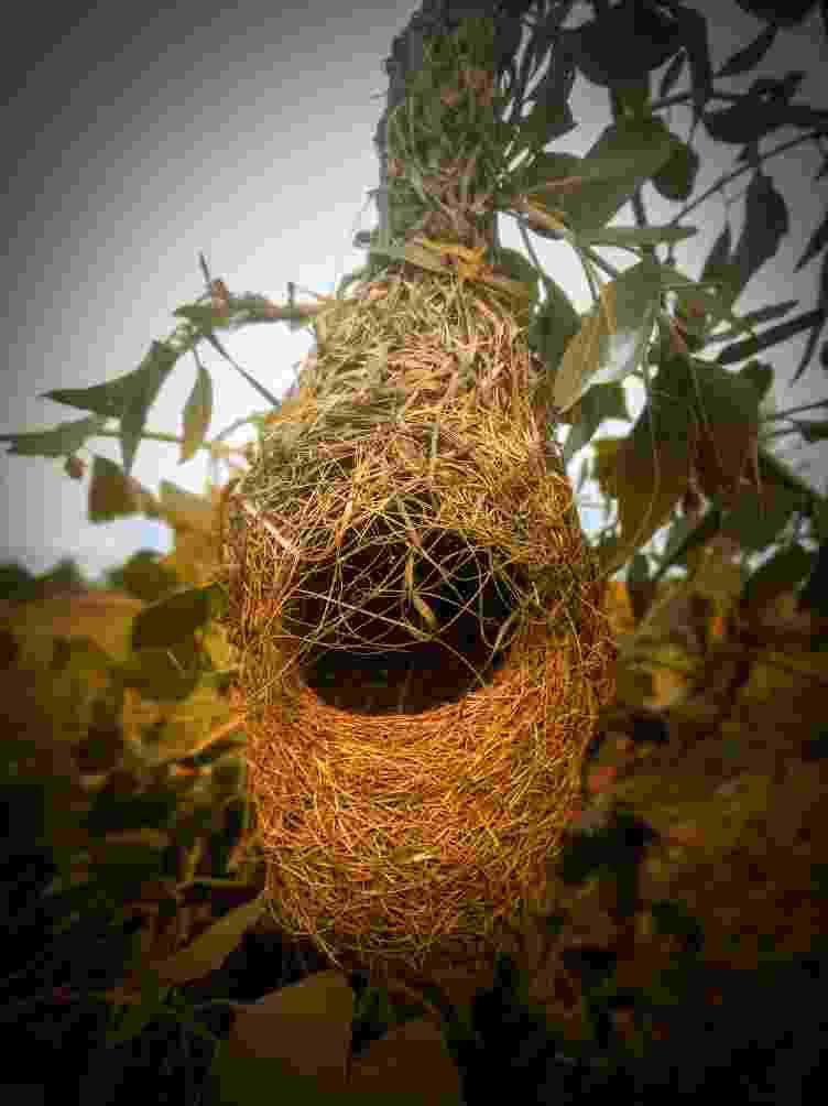 Sparrow nest