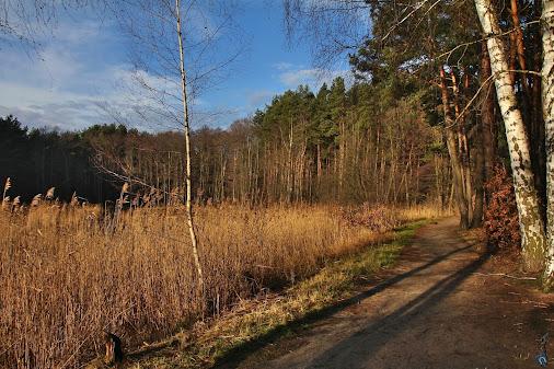 At the larger pond #Poland #Polska #Poznań #Wielkopolska #Morasko #Umultowo #nature #landscape #land...