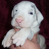 Sharon's blue-eyed boy @ 3 weeks