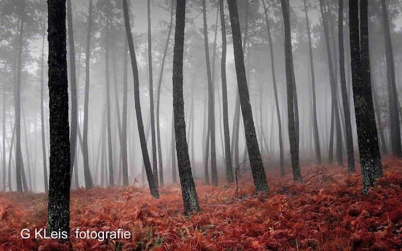 Herfst 2013 - Herfst_2013_011.jpg