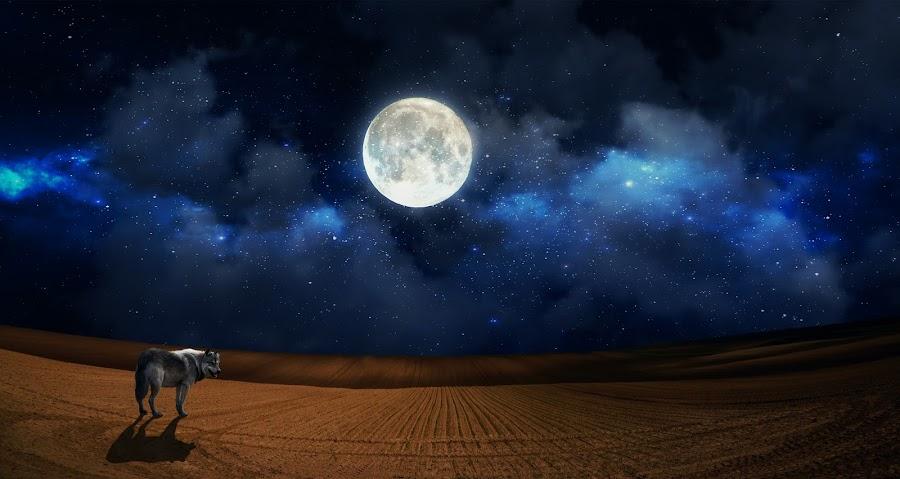 Night hunt by Radim Gibes - Digital Art Animals ( moon, desert, wolf, hunt, night,  )