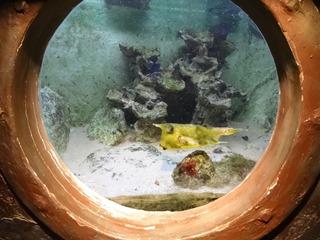 2016.03.14-039 poissons