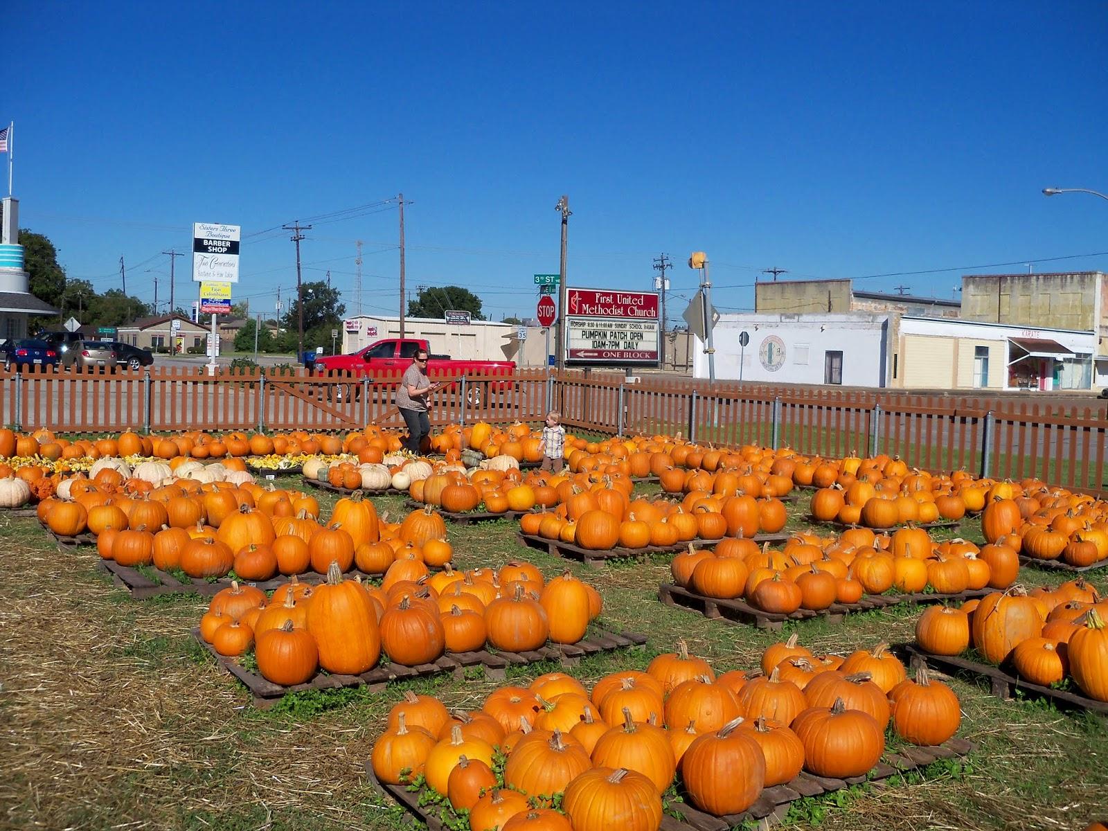Pumpkin Patch 2014 - 116_4424.JPG