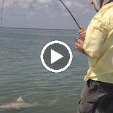 Dan's 30 second Shark Video.MOV