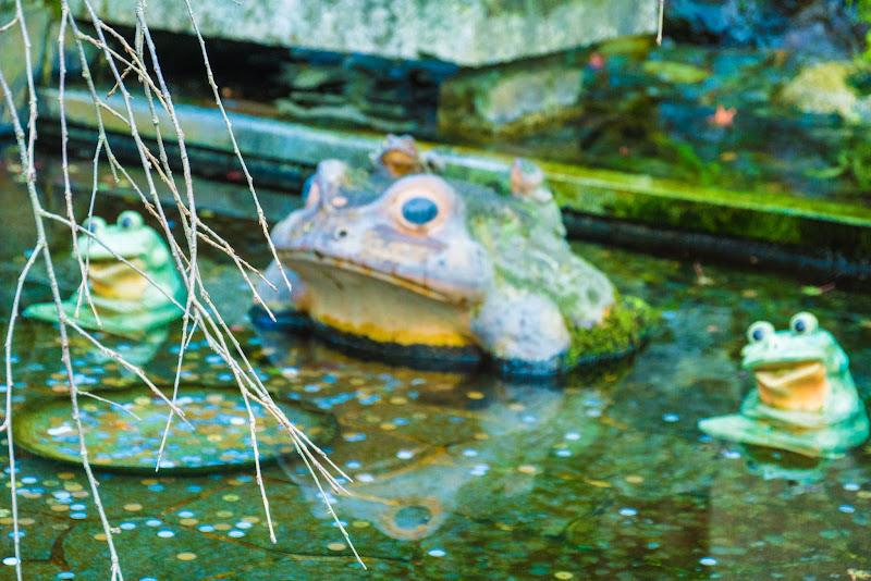 京都 紅葉 天竜寺 写真6