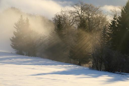Slnko cez smreky