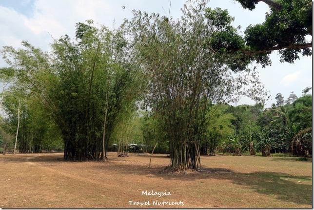馬來西亞沙巴 九如河泛舟 溜索 (65)