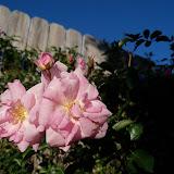 Gardening 2013 - 115_5413.JPG