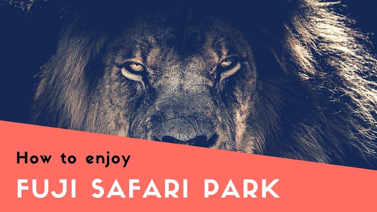 富士サファリパークの入園料は高い?チケットをお得にする方法や楽しみ方解説
