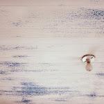 Christina_Kling_Garrett-Trespassing_.jpg