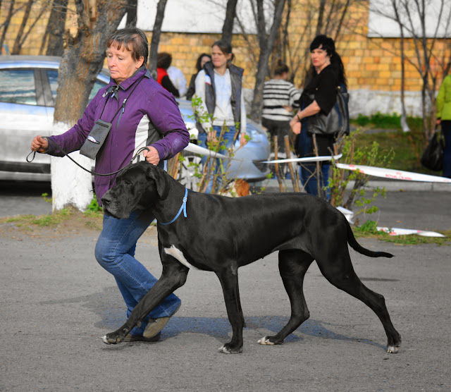 Кубок Аризоны-14(ПК)+ЧРКФ, Красноярск, 27 апреля 2014 DSC_6063