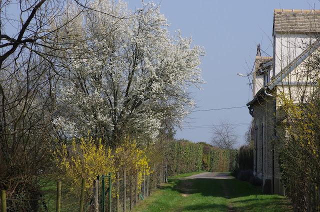 Matinée printanière. Les Hautes-Lisières (Rouvres, 28), 23 mars 2012. Photo : J.-M. Gayman