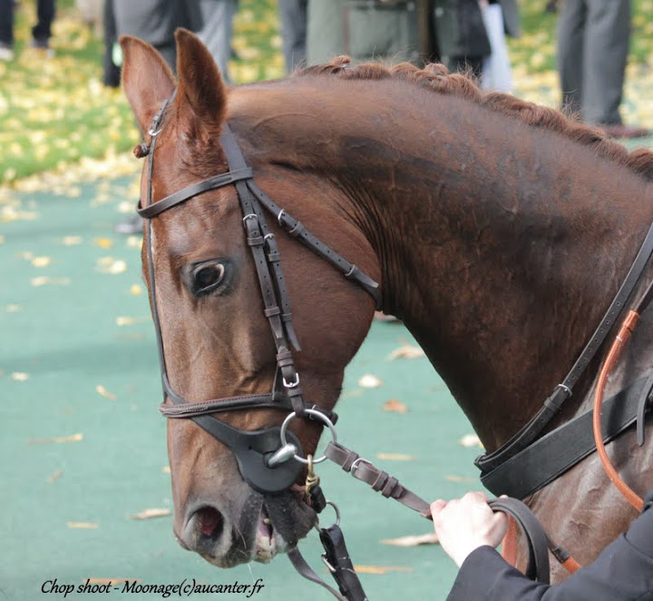 Photos Auteuil 7-11-2015 (48h de l'obstacle) IMG_6205