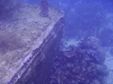 We discovered this barge wreck on our drift dive at 9m-