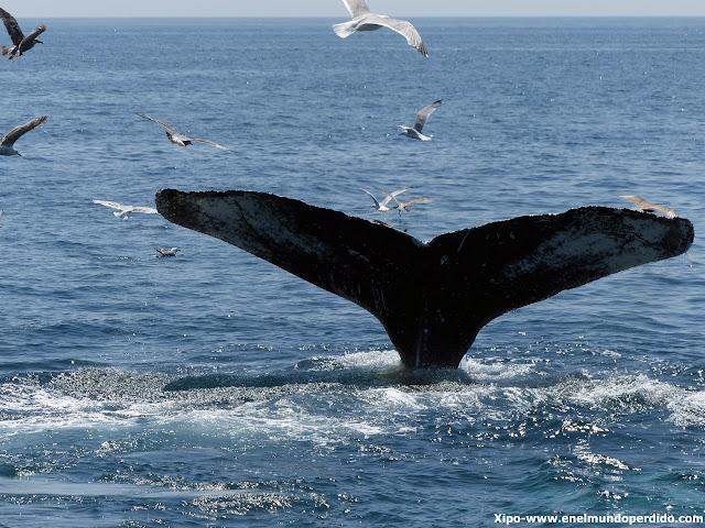 ballena-cape-cod.JPG