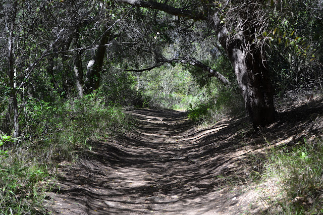 oak lined trail