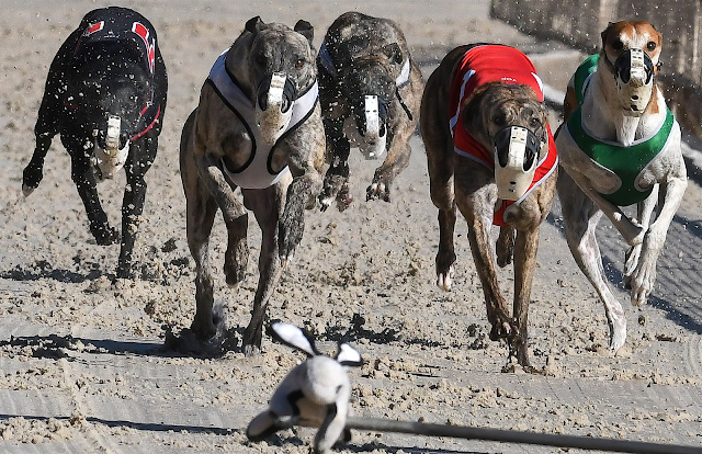 Dog days of Florida come to an end, with total demise of U.S. greyhound racing within sight