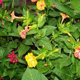 Gardening 2014 - 116_1955.JPG