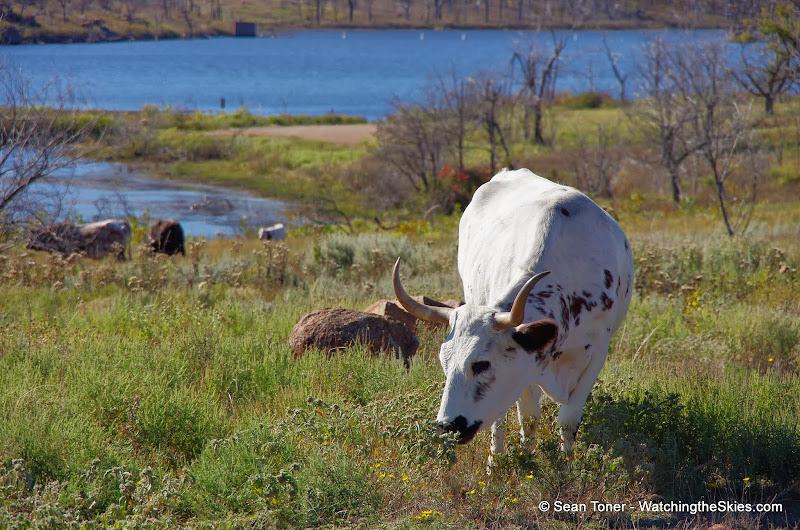 11-09-13 Wichita Mountains Wildlife Refuge - IMGP0412.JPG