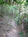 Khao Yai National park - trail to Mo Sing - deserted (only one couple) but partially signposted and without problems with navigation, just exhausting with a lot of leeches