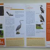 Наблюдение за птицами в природном парке - картинки и описания встречающихся птиц, чеклист
