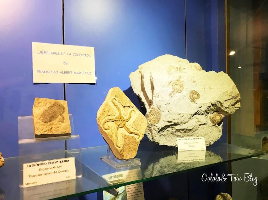 Fósiles marinos en el museo marítimo de asturias