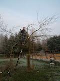 Appelbomen snoeien in Hijken, Drenthe