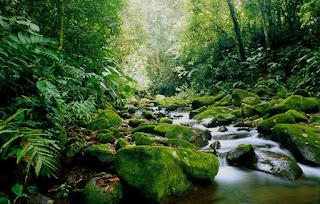 Zelena Kostarika