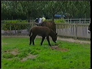 2001.08.26-002 baudets du Poitou