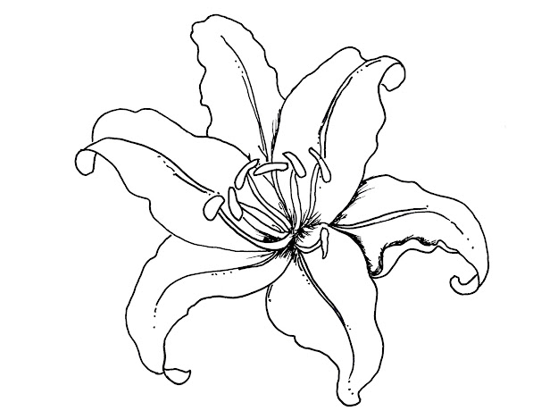 Incridible Lily Coloring Pages For Lily Coloring Pages Printable