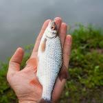 20140421_Fishing_Hodosy_007.jpg