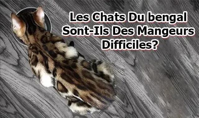 Les Chats Du bengal Sont-Ils Des Mangeurs Difficiles?