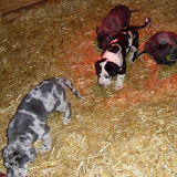 Celeste's babies @ 5 weeks