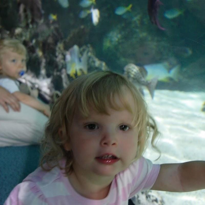 Aquarium_25.jpg
