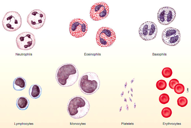 FastStoneEditor Sistem Transportasi (3) : Darah manusia
