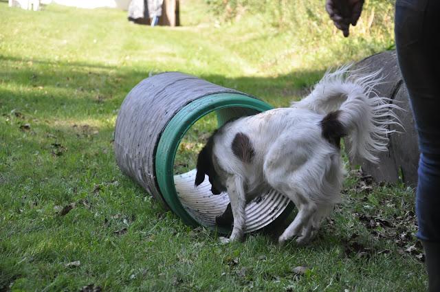 Survival voor Baas en Hond 2012 - DSC_0416.JPG
