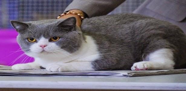 Jual Beli Kucing Dan Burung Ocehan
