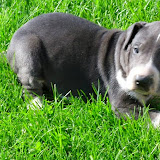 "Gale's ""Gidget"" @ 4 1/2 weeks"