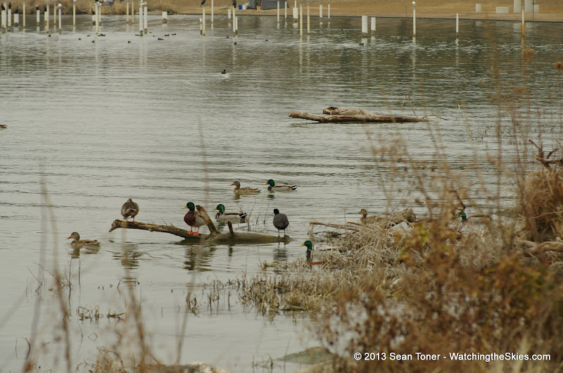 01-26-13 White Rock Lake - IMGP4352.JPG