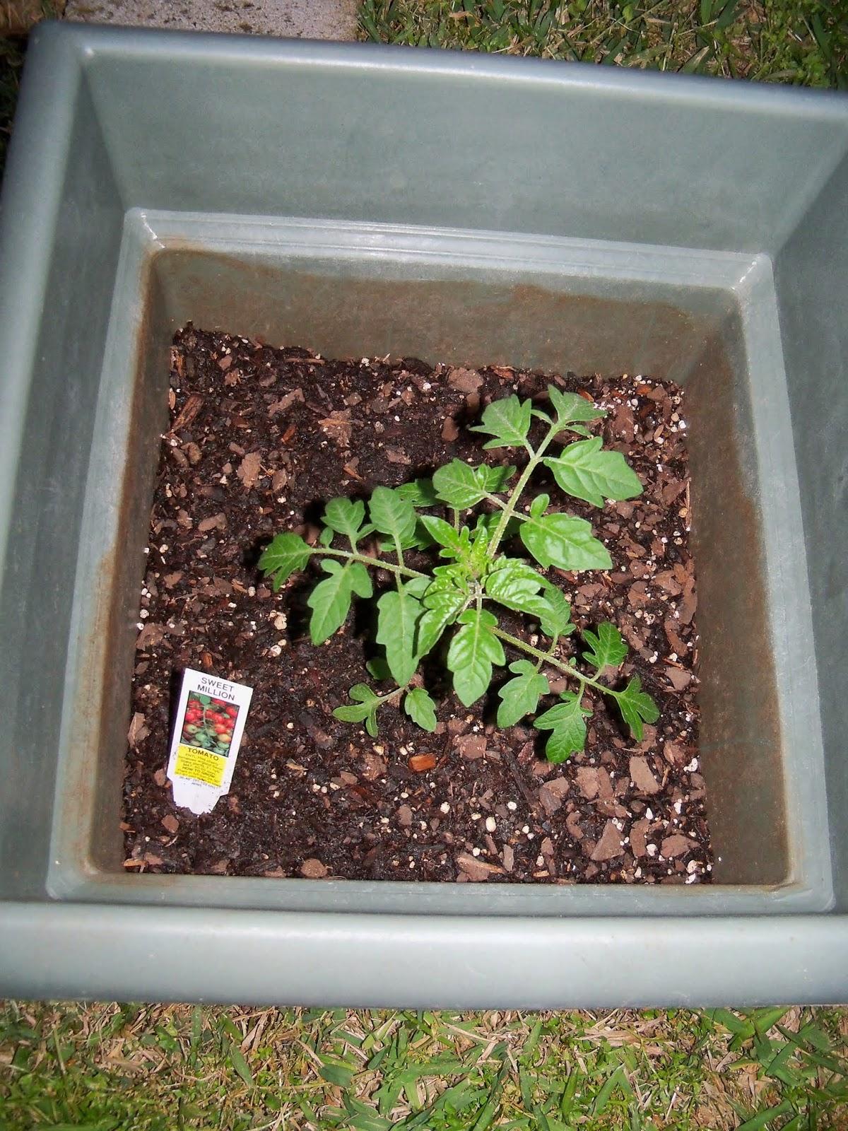 Gardening 2014 - 116_1146.JPG