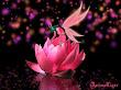Pink Little Elf