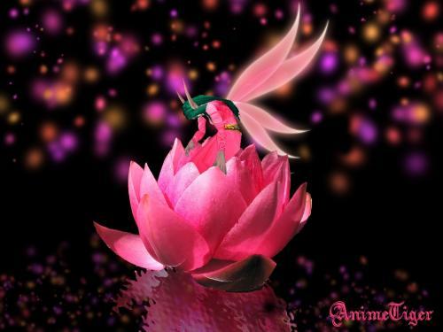 Pink Little Elf, Elven Girls
