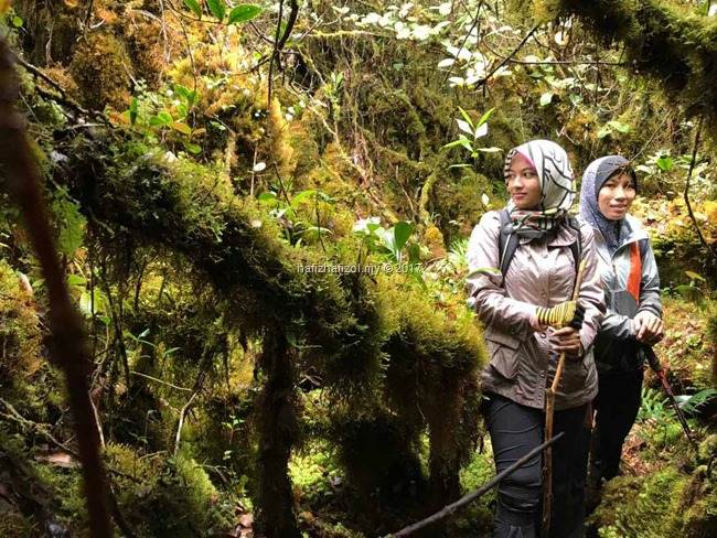 mossy forest cantik gunung siku