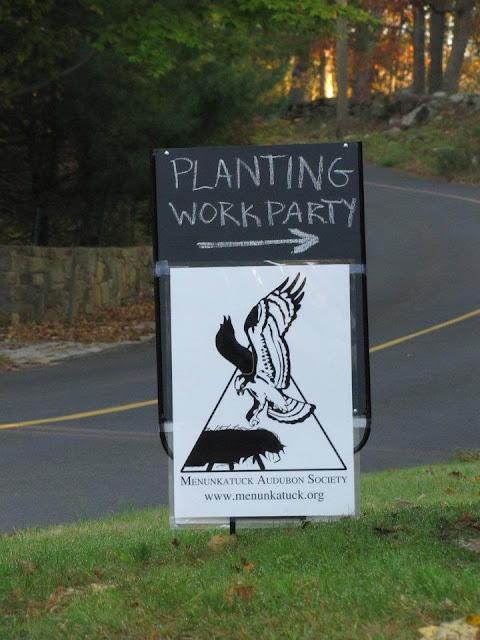 Guilford Salt Meadows Sanctuary Planting - 312945_10150343159559480_730539479_8052554_1425480493_n.jpg