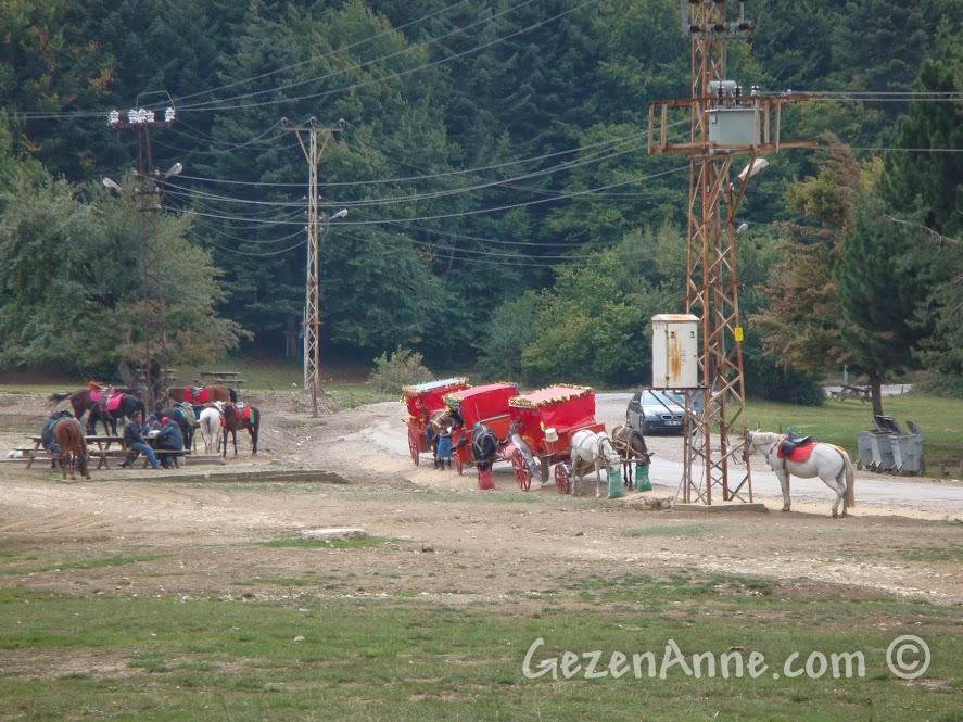 Abant Gölü etrafında tur atabileceğiniz faytonlar ve atlar