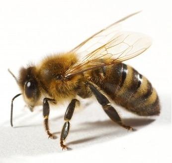 [bee%255B2%255D.jpg]