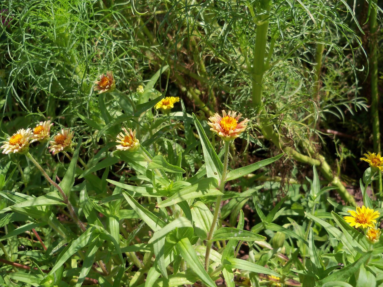 Gardening 2010, Part Three - 101_4367.JPG
