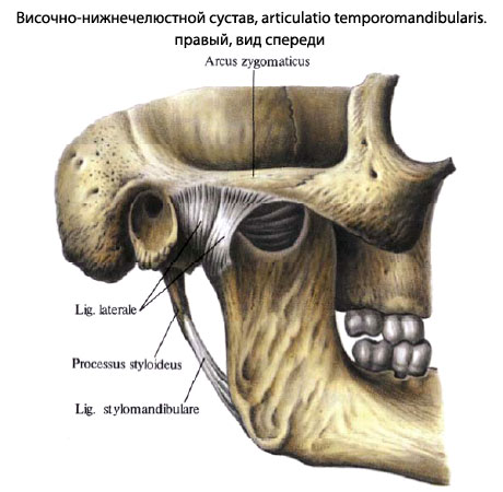 Почему хрустят суставы челюсти хруст голеностопных суставов