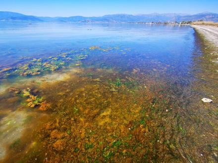 Ερυθρά παλίρροια στο Ναύπλιο - Πως προκαλείται το φαινόμενο