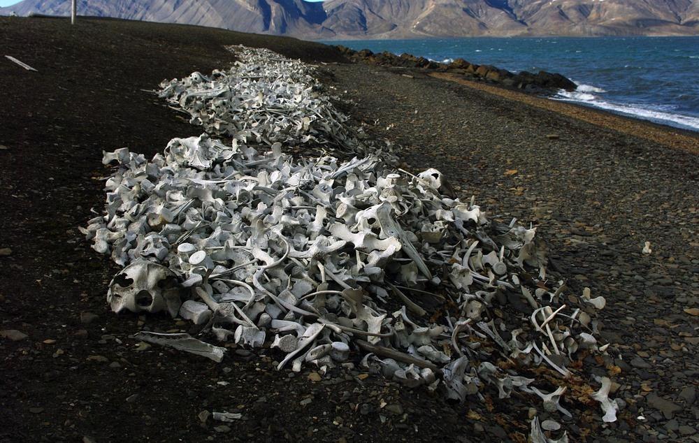 spitsbergen-whale-graveyard-3